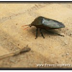 Taking Photos of Gnarly Bugs in Cambodia