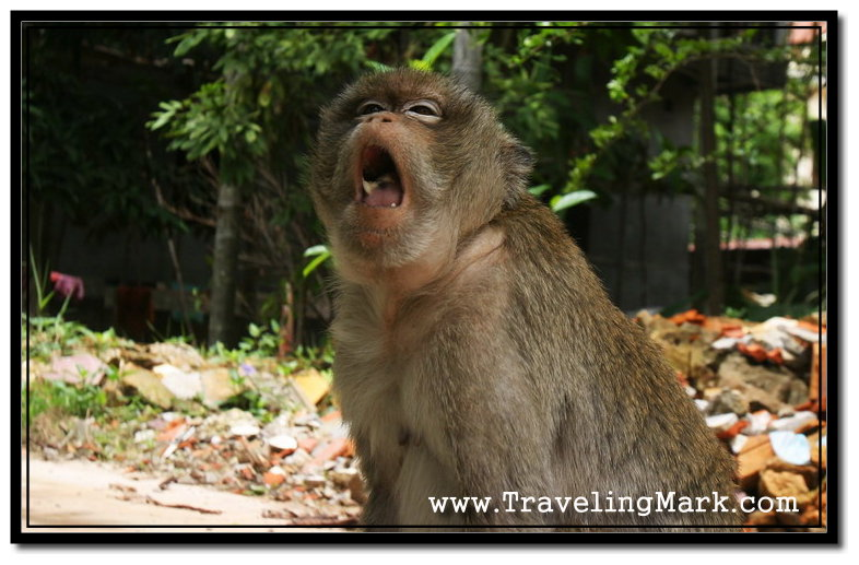 Photo: Monkey Kept Pulling Faces at Me to Show His Dismay