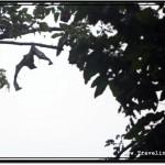 Photo: Awaken Flying Fox Spread the Wings in Anger