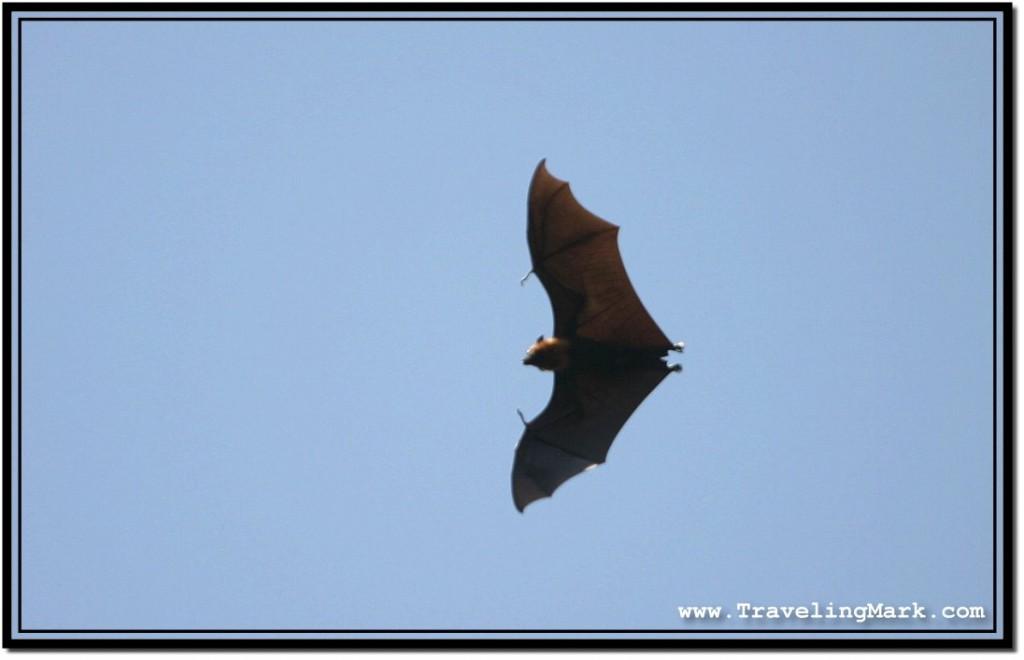 Photo: Dreary Bat Shape in the Sky