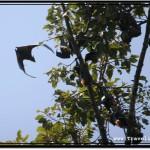 Photo: Circling Around Tall Bat Trees
