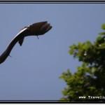 Photo: Sun Reflects Off Rubbery, Dark Fruit Bat Skin