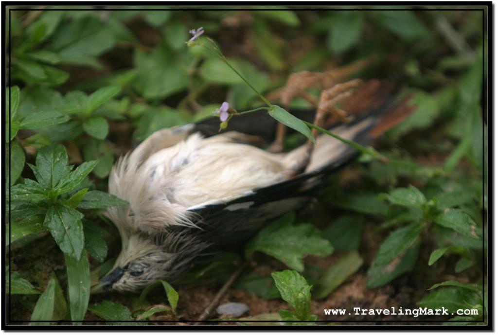 Photo: Dead Bird Underneath Bat Trees, But It Was No Bats That Killed It