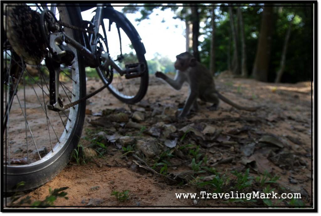 Photo: Monkey Comes to Probe my Bike
