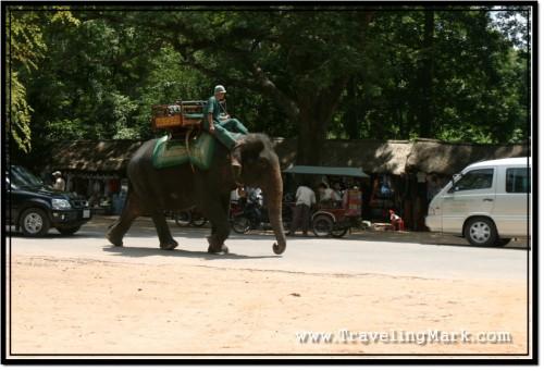 Photo: Elephants for Hire at Angkor Wat