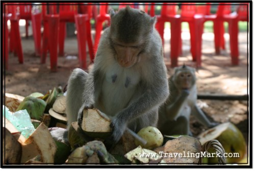Photo: Angkor Wat Resident Monkeys Kept Me Company by Eating Coconut Leftovers