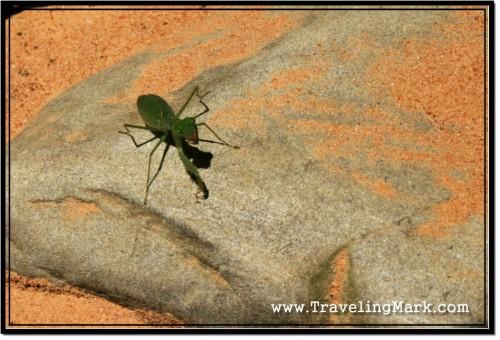 Photo: Praying Mantis Enjoying the Warm Rays of Cambodian Sun