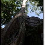 Photo: Monstrous Trees Growing on a Gallery of Ta Prohm Temple