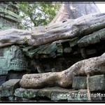 Photo: Tree Roots at Ta Prohm Temple Crawling Over Stones like Snakes