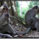 Feeding Monkeys of Angkor Thom