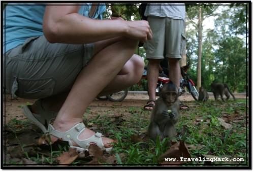 Photo: Visitors to Angkor Thom Feeding Wild Monkeys
