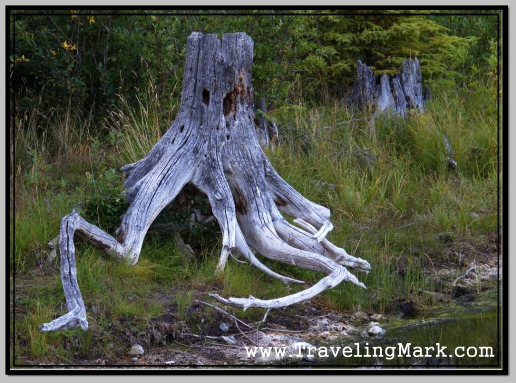 Photo: As You Grow Spiritually, You Develop Closeness with Nature